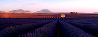 Valensole Sunset